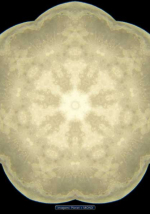 imagami-Mond