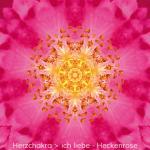 04-Dia-Heckenrose