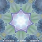 06-Dia-Hortensie