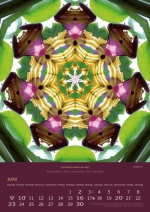 imagami-Kalender-2019-06
