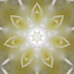 Paradieskarte-12--Orchidee-Front